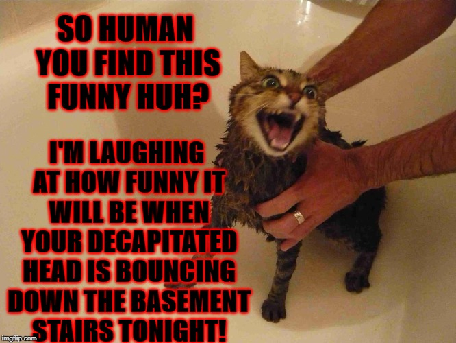 SO HUMAN YOU FIND THIS FUNNY HUH? I'M LAUGHING AT HOW FUNNY IT WILL BE WHEN YOUR DECAPITATED HEAD IS BOUNCING DOWN THE BASEMENT STAIRS TONIG | image tagged in decapitation cat | made w/ Imgflip meme maker