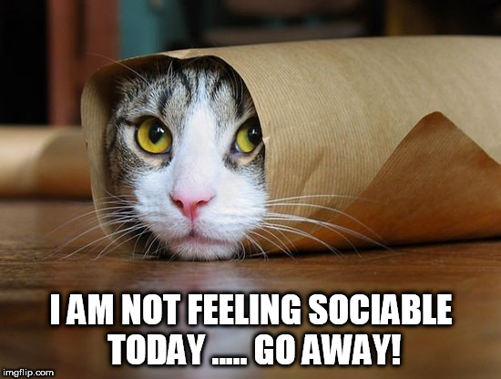 cute and funny animal pictures 6 | I AM NOT FEELING SOCIABLE TODAY ..... GO AWAY! | image tagged in cute and funny animal pictures 6 | made w/ Imgflip meme maker