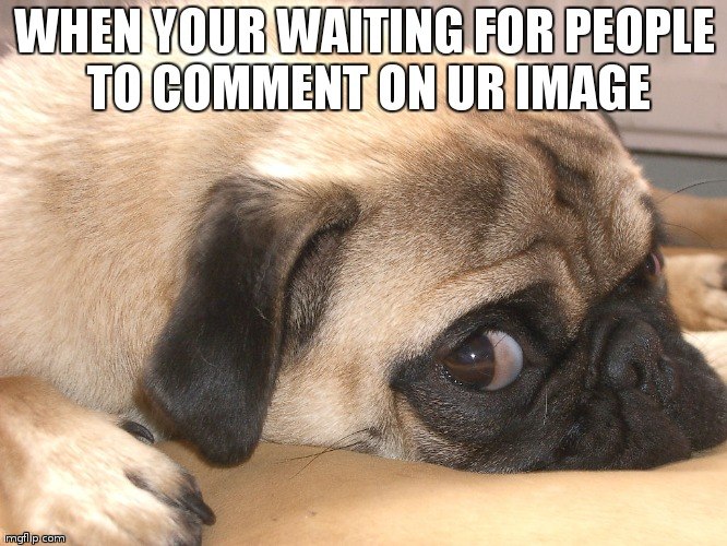 meh | WHEN YOUR WAITING FOR PEOPLE TO COMMENT ON UR IMAGE | image tagged in pugs | made w/ Imgflip meme maker