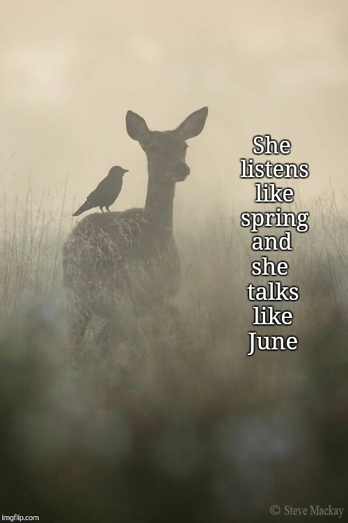 Spring Fever | She listens like spring and she talks like June | image tagged in deer,spring,nature,happy,peaceful,keep calm | made w/ Imgflip meme maker