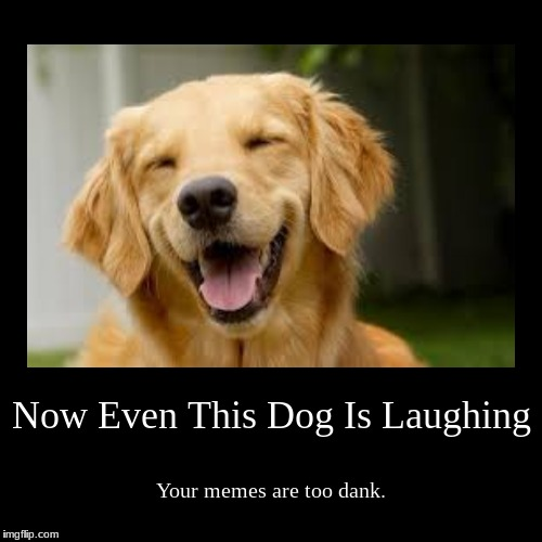 Now Even This Dog Is Laughing | Your memes are too dank. | image tagged in funny,demotivationals | made w/ Imgflip demotivational maker