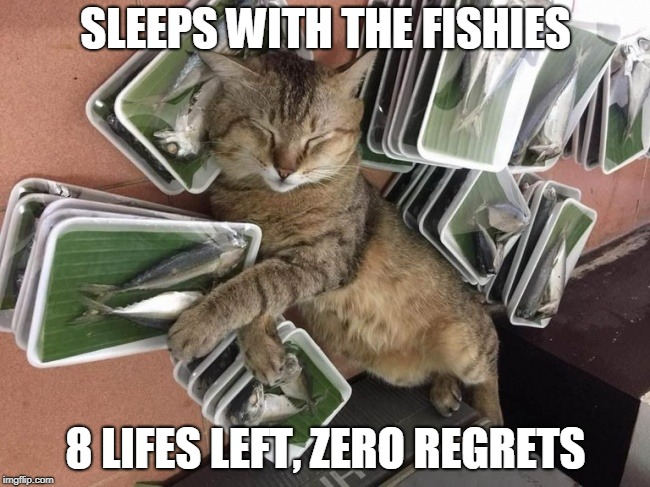Fish. It's What's For Dinner. | SLEEPS WITH THE FISHIES 8 LIFES LEFT, ZERO REGRETS | image tagged in memes,cats,fish,sleeping cat,cat,sleeping | made w/ Imgflip meme maker