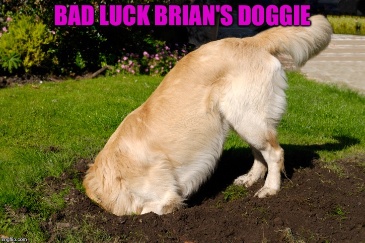 The shame! | BAD LUCK BRIAN'S DOGGIE | image tagged in bad luck brian,dog,memes,funny,shame | made w/ Imgflip meme maker