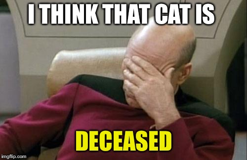 Captain Picard Facepalm Meme | I THINK THAT CAT IS DECEASED | image tagged in memes,captain picard facepalm | made w/ Imgflip meme maker