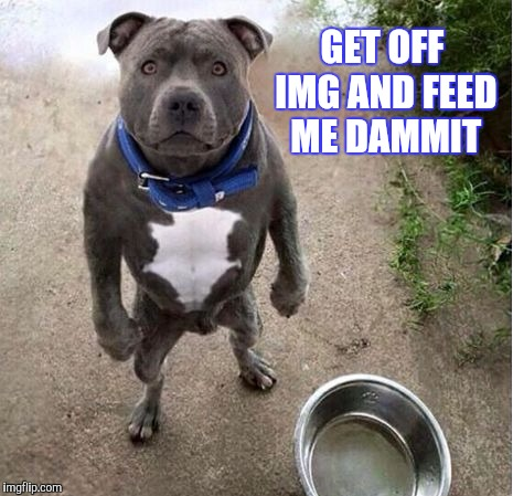 Y'all know who you are | GET OFF IMG AND FEED ME DAMMIT | image tagged in imgflip,meme addict,addiction,dog,hunger,funny animals | made w/ Imgflip meme maker