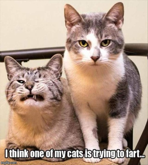 Funny cat fart | image tagged in funny cat,cat fart,my cat is trying to fart | made w/ Imgflip meme maker