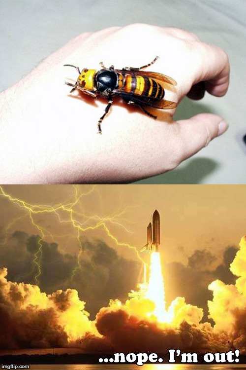Aw HELL naw! | image tagged in memes,giant bee,nope | made w/ Imgflip meme maker