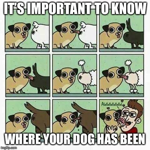 Your dog thinks you're an a-hole... |  IT'S IMPORTANT TO KNOW; WHERE YOUR DOG HAS BEEN | image tagged in funny dogs,licking,assholes,funny memes | made w/ Imgflip meme maker
