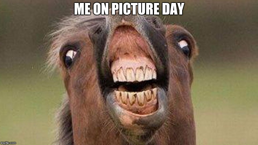 horse smile | ME ON PICTURE DAY | image tagged in horse,funny | made w/ Imgflip meme maker
