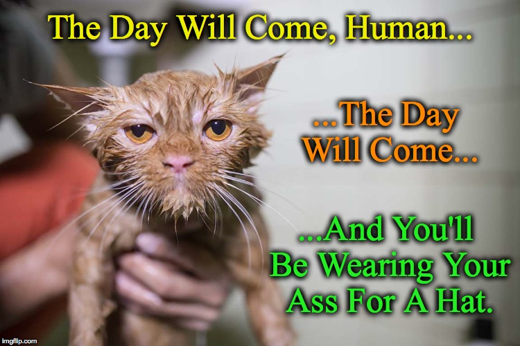 Wet And Pissed Off | The Day Will Come, Human... ...The Day Will Come... ...And You'll Be Wearing Your Ass For A Hat. | image tagged in bathtime for kitteh | made w/ Imgflip meme maker