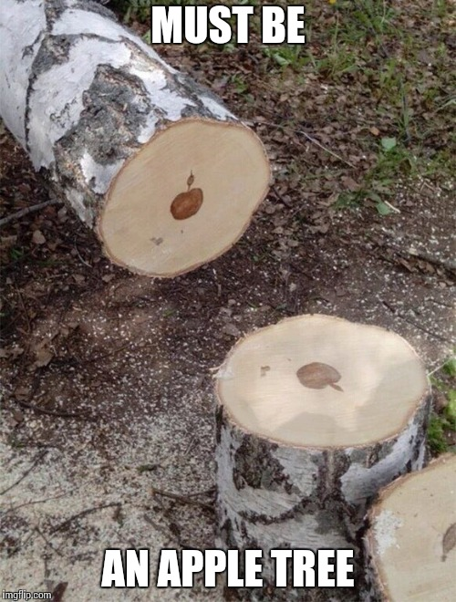 Applewood | MUST BE AN APPLE TREE | image tagged in apple,tree,wood,log,pipe_picasso | made w/ Imgflip meme maker