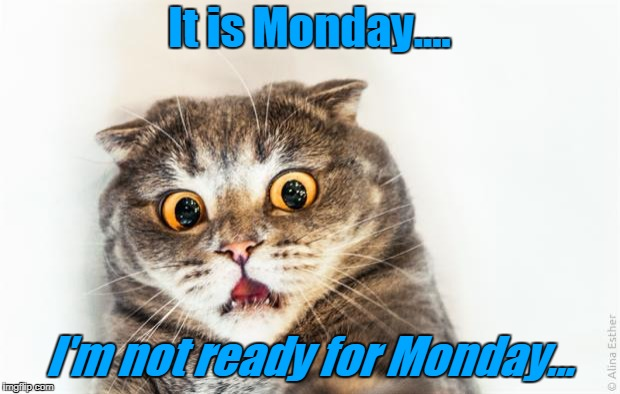 horrified cat | It is Monday.... I'm not ready for Monday... | image tagged in horrified cat | made w/ Imgflip meme maker