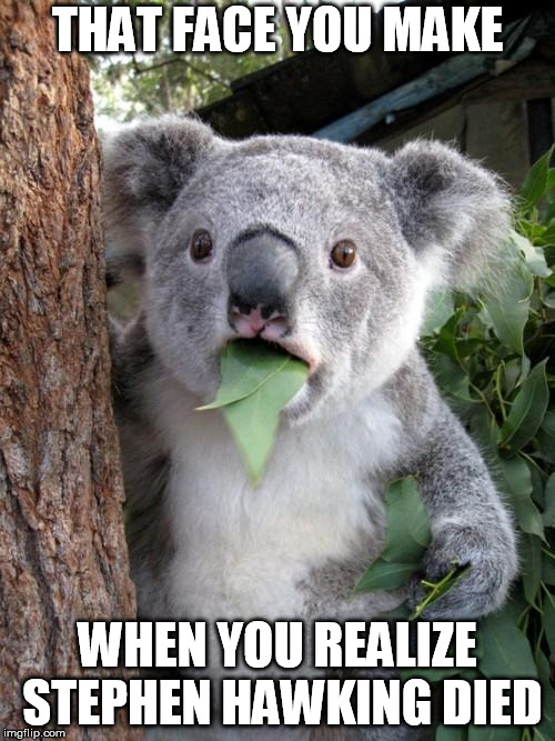 Surprised Koala Meme | THAT FACE YOU MAKE WHEN YOU REALIZE STEPHEN HAWKING DIED | image tagged in memes,surprised koala | made w/ Imgflip meme maker
