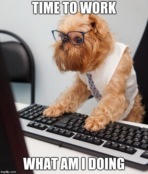 work time | TIME TO WORK WHAT AM I DOING | image tagged in work dog | made w/ Imgflip meme maker