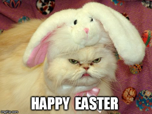 Happy Easter | HAPPY  EASTER | image tagged in happy easter,mad cat | made w/ Imgflip meme maker