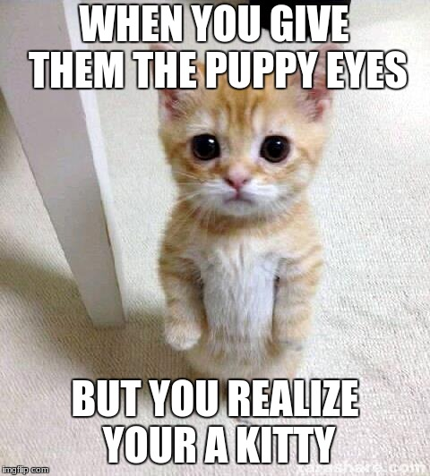 Cute Cat Meme | WHEN YOU GIVE THEM THE PUPPY EYES BUT YOU REALIZE YOUR A KITTY | image tagged in memes,cute cat | made w/ Imgflip meme maker