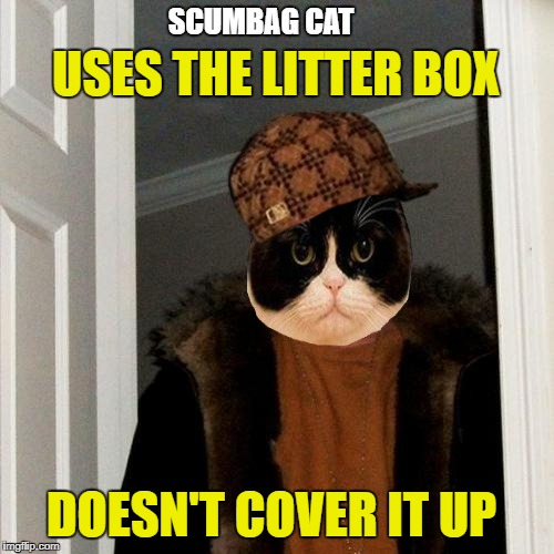 Steve the cat | USES THE LITTER BOX DOESN'T COVER IT UP SCUMBAG CAT | image tagged in funny memes,scumbag steve,cat,scumbag cat | made w/ Imgflip meme maker