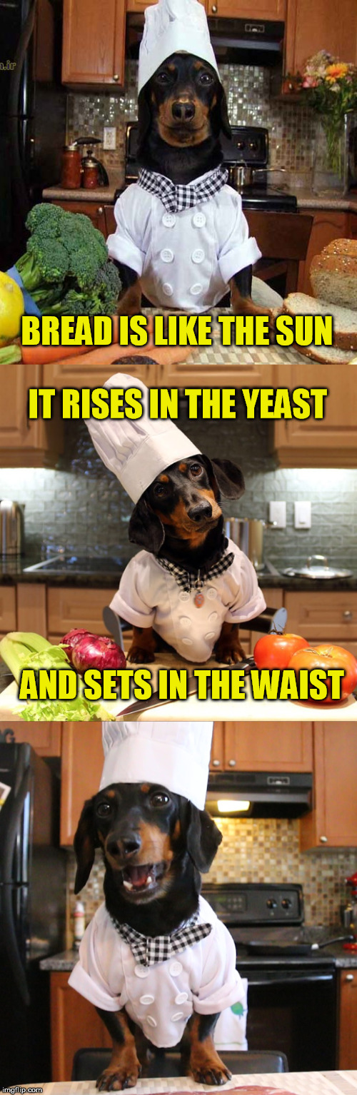 Are you bready for this pun? | BREAD IS LIKE THE SUN AND SETS IN THE WAIST IT RISES IN THE YEAST | image tagged in bread,meme,funny,funny dogs,chef,puns | made w/ Imgflip meme maker