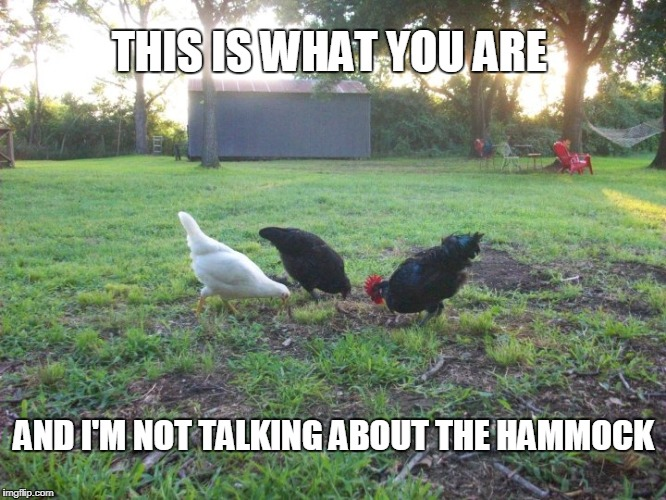 You, sir, are a chicken | THIS IS WHAT YOU ARE AND I'M NOT TALKING ABOUT THE HAMMOCK | image tagged in coward,chicken,scared,wimpy,hammock,yellow-bellied | made w/ Imgflip meme maker