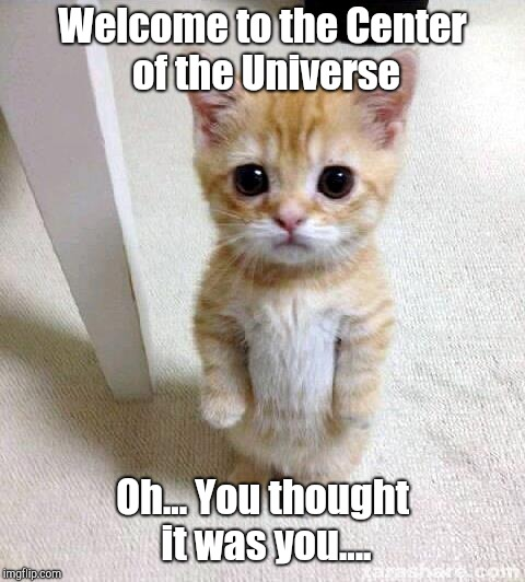 Cute Cat Meme | Welcome to the Center of the Universe Oh... You thought it was you.... | image tagged in memes,cute cat | made w/ Imgflip meme maker
