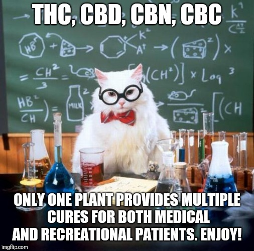 Chemistry Cat Meme | THC, CBD, CBN, CBC ONLY ONE PLANT PROVIDES MULTIPLE CURES FOR BOTH MEDICAL AND RECREATIONAL PATIENTS. ENJOY! | image tagged in memes,chemistry cat | made w/ Imgflip meme maker