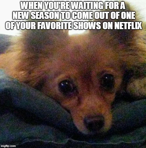 WHEN YOU'RE WAITING FOR A NEW SEASON TO COME OUT OF ONE OF YOUR FAVORITE SHOWS ON NETFLIX | image tagged in contemplating dog | made w/ Imgflip meme maker