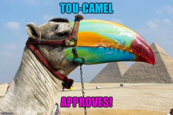 TOU-CAMEL APPROVES! | made w/ Imgflip meme maker