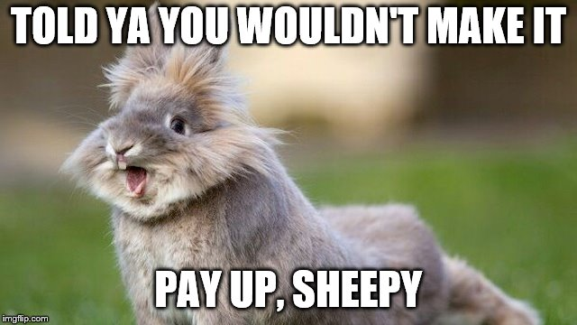 TOLD YA YOU WOULDN'T MAKE IT PAY UP, SHEEPY | made w/ Imgflip meme maker