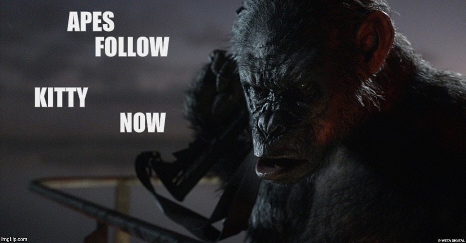 Apes Follow Koba Now,,, | APES                         FOLLOW                  KITTY                                       NOW | image tagged in apes follow koba now   | made w/ Imgflip meme maker