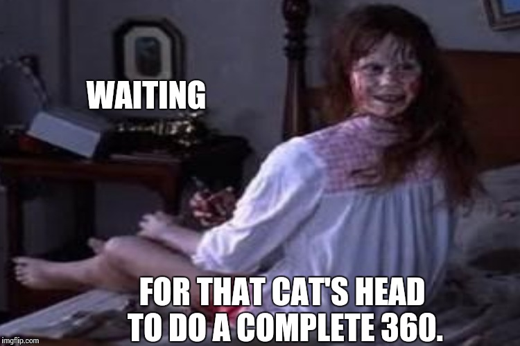 WAITING FOR THAT CAT'S HEAD TO DO A COMPLETE 360. | made w/ Imgflip meme maker
