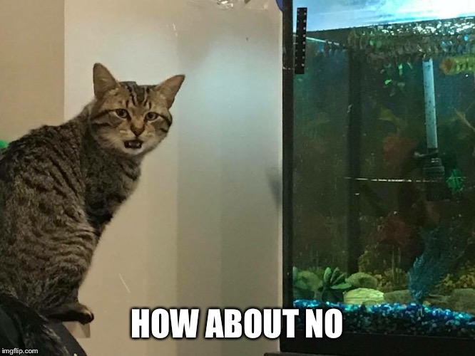 No Cat  | HOW ABOUT NO | image tagged in no cat,cat,cats,funny cats,the most interesting cat in the world,lolcats | made w/ Imgflip meme maker