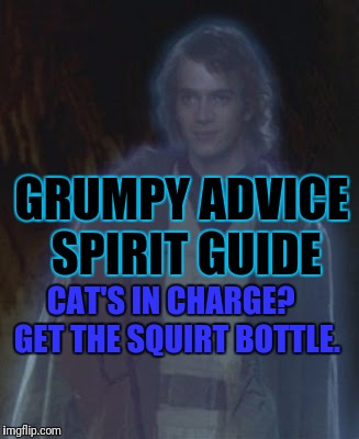 GRUMPY ADVICE SPIRIT GUIDE CAT'S IN CHARGE?  GET THE SQUIRT BOTTLE. | made w/ Imgflip meme maker
