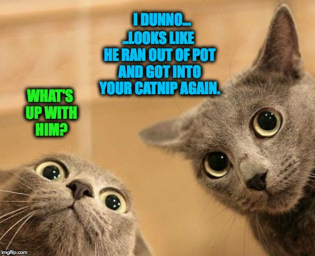 10 Guy's Cats | WHAT'S UP WITH HIM? ..LOOKS LIKE HE RAN OUT OF POT AND GOT INTO YOUR CATNIP AGAIN. I DUNNO... | image tagged in out cold | made w/ Imgflip meme maker