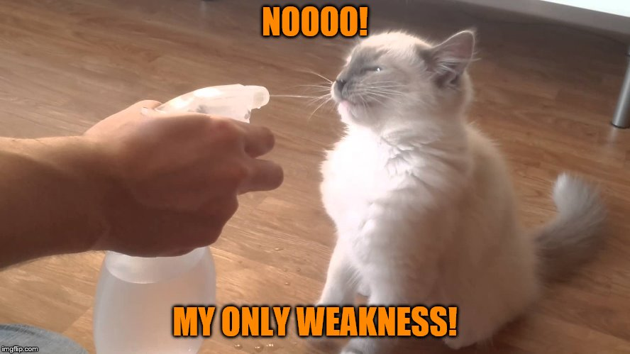 NOOOO! MY ONLY WEAKNESS! | made w/ Imgflip meme maker