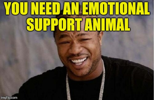 Yo Dawg Heard You Meme | YOU NEED AN EMOTIONAL SUPPORT ANIMAL | image tagged in memes,yo dawg heard you | made w/ Imgflip meme maker