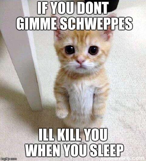 Cute Cat Meme | IF YOU DONT GIMME SCHWEPPES ILL KILL YOU WHEN YOU SLEEP | image tagged in memes,cute cat | made w/ Imgflip meme maker