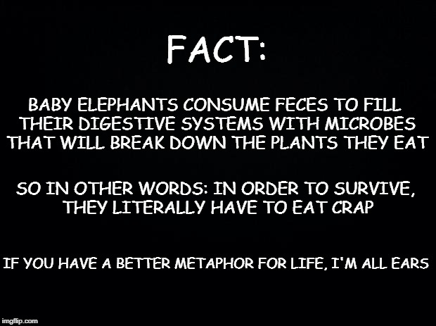 Black background | FACT: BABY ELEPHANTS CONSUME FECES TO FILL THEIR DIGESTIVE SYSTEMS WITH MICROBES THAT WILL BREAK DOWN THE PLANTS THEY EAT SO IN OTHER WORDS: | image tagged in black background | made w/ Imgflip meme maker