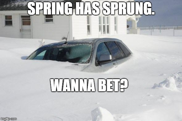 Snow storm Large | SPRING HAS SPRUNG. WANNA BET? | image tagged in snow storm large | made w/ Imgflip meme maker