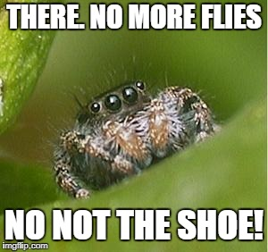 Misunderstood Spider | THERE. NO MORE FLIES NO NOT THE SHOE! | image tagged in misunderstood spider | made w/ Imgflip meme maker