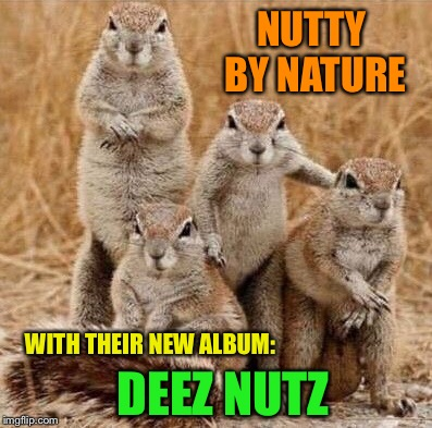 From the producers that brought you Alvin and the Chipmunks!  Introducing: | NUTTY BY NATURE DEEZ NUTZ WITH THEIR NEW ALBUM: | image tagged in squirrel,rap,funny animals,funny memes,gangsta rap made me do it | made w/ Imgflip meme maker