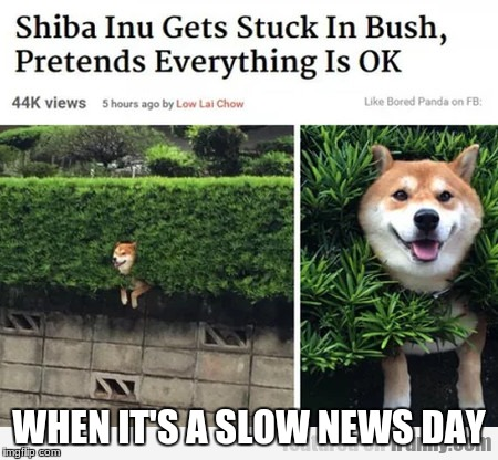 When it's a slow news day | WHEN IT'S A SLOW NEWS DAY | image tagged in doge,bush,stuck | made w/ Imgflip meme maker
