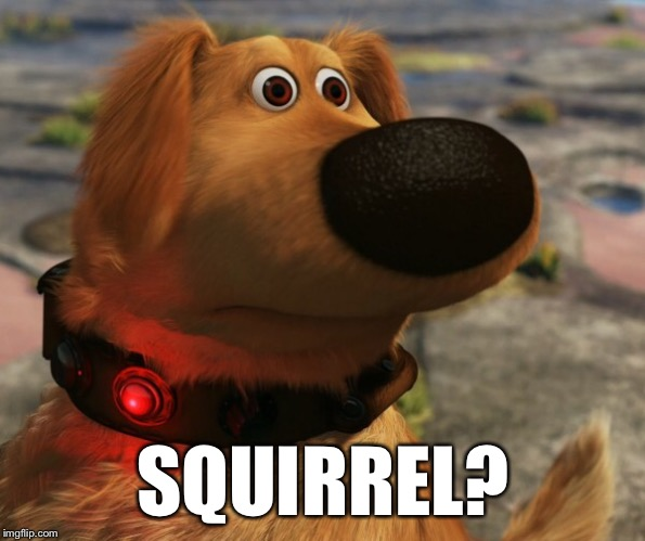 SQUIRREL? | made w/ Imgflip meme maker