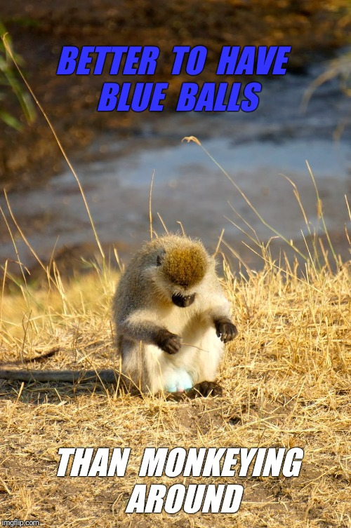 BETTER  TO  HAVE  BLUE  BALLS THAN  MONKEYING  AROUND | made w/ Imgflip meme maker