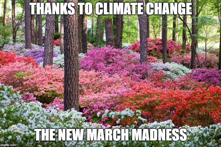 THANKS TO CLIMATE CHANGE THE NEW MARCH MADNESS | image tagged in flowers | made w/ Imgflip meme maker