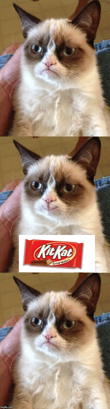 Subtle, very subtle. | image tagged in grumpy cat,chocolate,memes,funny | made w/ Imgflip meme maker