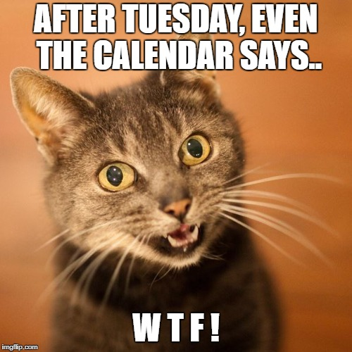 Wow Cat | AFTER TUESDAY, EVEN THE CALENDAR SAYS.. W T F ! | image tagged in wow cat | made w/ Imgflip meme maker