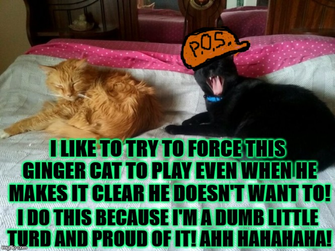 I LIKE TO TRY TO FORCE THIS GINGER CAT TO PLAY EVEN WHEN HE MAKES IT CLEAR HE DOESN'T WANT TO! I DO THIS BECAUSE I'M A DUMB LITTLE TURD AND  | image tagged in piece of crap | made w/ Imgflip meme maker