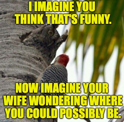 For Whom the Owl Tolls. | I IMAGINE YOU THINK THAT'S FUNNY. NOW IMAGINE YOUR WIFE WONDERING WHERE YOU COULD POSSIBLY BE. | image tagged in irritated owl,memes,the history of bad ideas | made w/ Imgflip meme maker