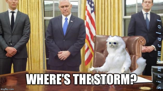Guardian Cat In Oval Office | WHERE'S THE STORM? | image tagged in guardian cat in oval office | made w/ Imgflip meme maker