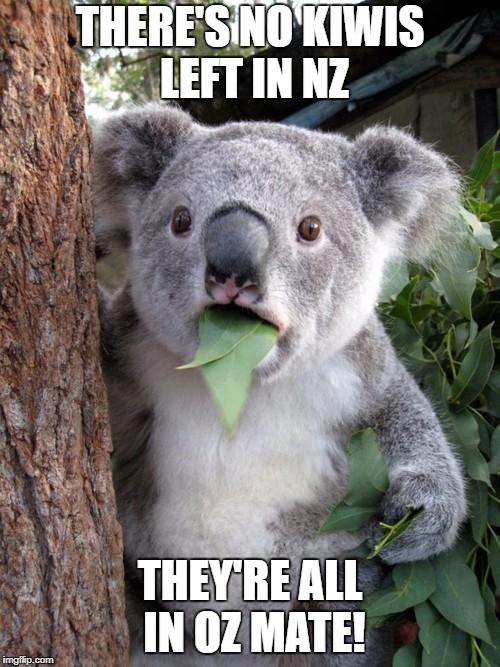 THERE'S NO KIWIS LEFT IN NZ THEY'RE ALL IN OZ MATE! | made w/ Imgflip meme maker